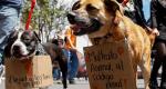 Legislaciones a nivel global para el bienestar animal