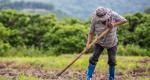 Estacionalidad Agrícola: tema latente en el contexto de la implementación del T-MEC