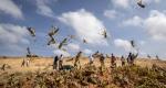Consecuencias exacerbadas del cambio climático: las plagas y las enfermedades transfronterizas contemporáneas