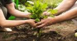 La agricultura sostenible y su contribución económica, social y ambiental